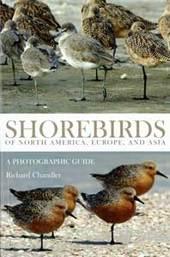 Shorebirds2s
