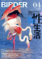 Birder201204