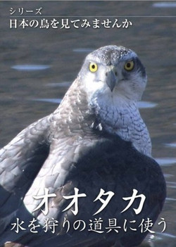 Nihonnotoridvd_ootakas_