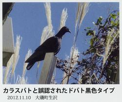 Kanagawa200610fig