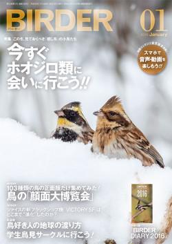 Birder201601_3