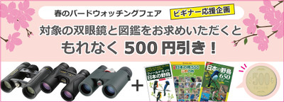 555x200x2016_500yensale_flashjpgp_2