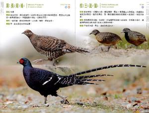 Taiwansanyanotori_2sjpgpagespeedc_2