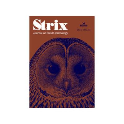 Strix_31