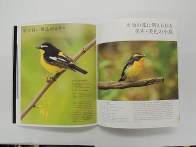 Nihonnoutukusii01s