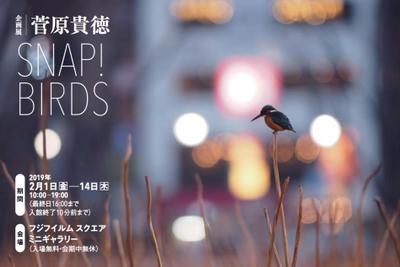 Tsugawara_snapbirds