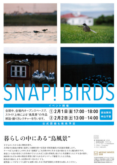 Snapbirds_2s