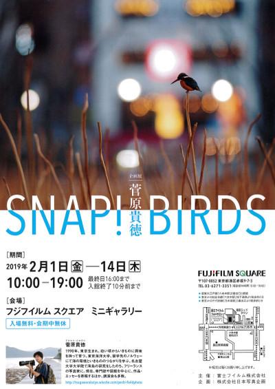Snapbirds_1s