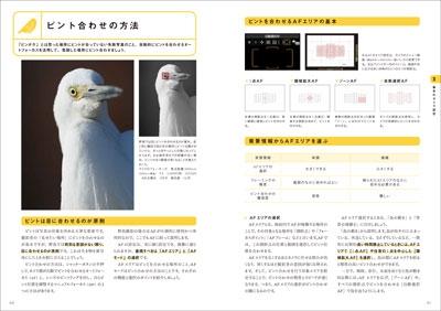 0601_yacyo_nakamen2-1