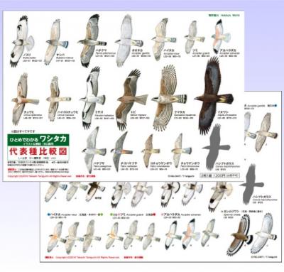 Hitomedewasitaka_20210904144801