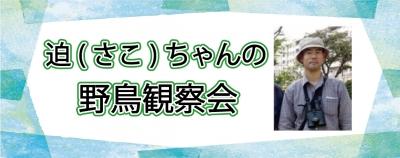 Sakochanbana_20210106103501